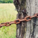 Wooden fence post chained to a tree